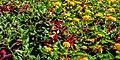 Butchart Gardens - Victoria, British Columbia, Canada (29294184042).jpg