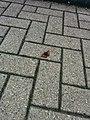 Butterfly on street 2.jpg