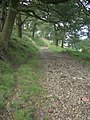 Byway in woodland near Caerau - geograph.org.uk - 1438989.jpg