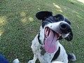 Cão Max.jpg
