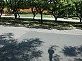 C15 - panoramio.jpg