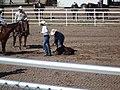 CFD Tie-down roping releasing the calf.jpg