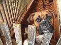 Cachorrao - panoramio.jpg