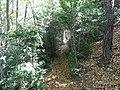 Camí a la carena de la Serra de Bellmunt (setembre 2012) - panoramio.jpg