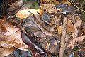Camouflage DSC05383.JPG
