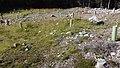 Canadian Dump (Mar Lodge Estate) (22SEP12) (03).jpg