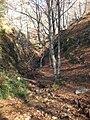 Canal dels Castellets, Parc Natural del Montseny (desembre 2011) - panoramio (1).jpg