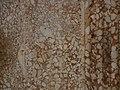 Castel del Monte 09.jpg