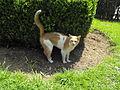 Cat0015.JPG
