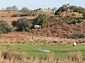 Cerrig Y Cathod, Nr. Treban Meurig, Anglesey. - geograph.org.uk - 108904.jpg
