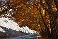 Chaloos Road - Asara - panoramio.jpg