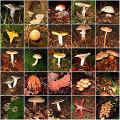 Živé prírodniny - huby