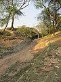 Chandraketugarh Mound - Berachampa 2012-02-24 2516.JPG