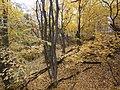 Cherkas'kyi district, Cherkas'ka oblast, Ukraine - panoramio (330).jpg