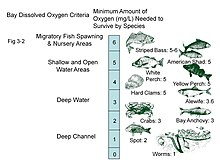 Dissolved oxygen levels required by various species in the Chesapeake Bay  (US)