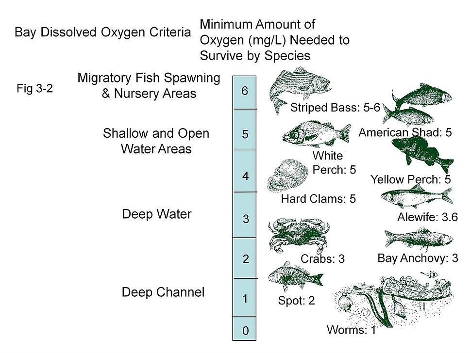 Chesapeake Bay - Dissolved oxygen requirements