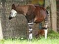 Chester Zoo (14732763184).jpg