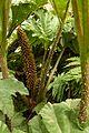 Christchurch Botanic Gardens, New Zealand section, detail 2016-02-04.jpg