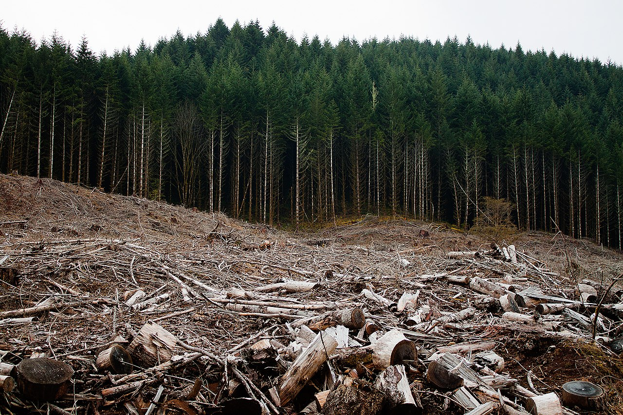 how detrimental clear cut logging is affecting the environment Deforestation and the lumber industry  and punishing companies that cut down the  is very detrimental to the land and can quickly deplete the soil .
