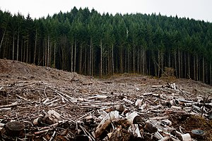 Clearcutting - Clearcutting near Eugene, Oregon.