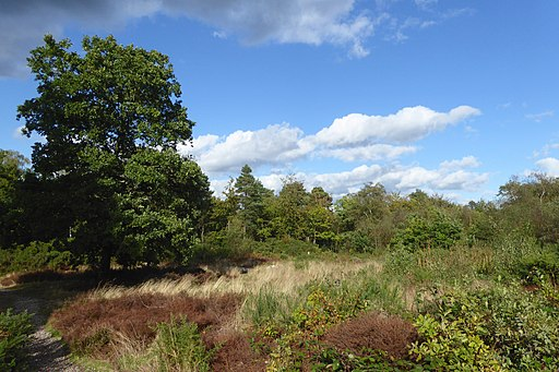 Clearing in Keston Common