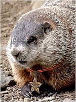 Closeup groundhog FA.JPG