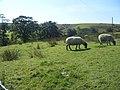 Clough Head and Clough Head Hill - geograph.org.uk - 1491134.jpg