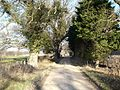 Clwydian Way - geograph.org.uk - 113886.jpg