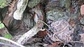 Cold Spring, Travis County (10.3897-subtbiol.28.29282) Figure 2.jpg