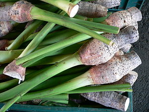 Cuisine of Hawaii - Taro, Colocasia esculenta was brought to Hawaii by the Polynesians
