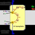 Complex III et.png
