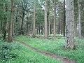 Conifer woods, Great Ridge - geograph.org.uk - 915755.jpg