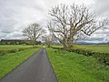 Country road near Carenestock - geograph.org.uk - 455186.jpg