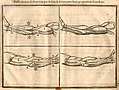 Cousin, Jehan (1522-1593) (musculi antebrachii).jpg