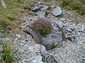 Cowlyd Quarry drum.jpg
