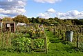 Cuckfield Allotments - geograph.org.uk - 1018233.jpg
