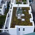Dachbegrünung - panoramio.jpg