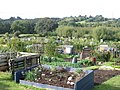 Daggs Allotments, Thornbury - geograph.org.uk - 569264.jpg