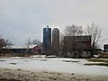 Dairy Farm - panoramio (5).jpg
