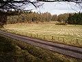 Dalreoch Wood - geograph.org.uk - 155661.jpg