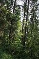 Dans la forêt de la Grand'Côte - img 15533.jpg