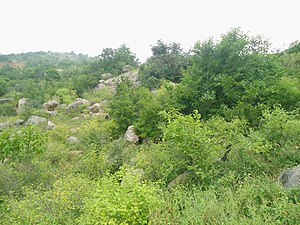 Deccan thorn scrub forests - Scrub forests at Mastyagiri, Telangana