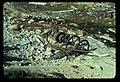 Defunct mining equipment. 101975. slide (ea4b419191554603b7d8503a207c74ab).jpg
