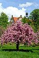 Der Schlosspark Weikersheim im Frühling. 01.jpg