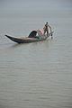 Desi Boat - River Ichamati - Taki - North 24 Parganas 2015-01-13 4333.JPG