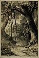 Die Pflanzendecke der Erde - populäre Darstellung der Pflanzengeographie für gebildete Naturfreunde (1859) (20946388361).jpg