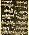 Die gestielten crinoiden der Siboga-expedition (1907) (20738084788).jpg