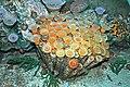 Diorama of a Devonian seafloor - corals, brachiopods, algae (43824568800).jpg