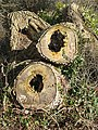 Diseased trees in Southend Lane - geograph.org.uk - 674295.jpg