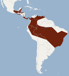 Distribution of Lonchorhina aurita.png